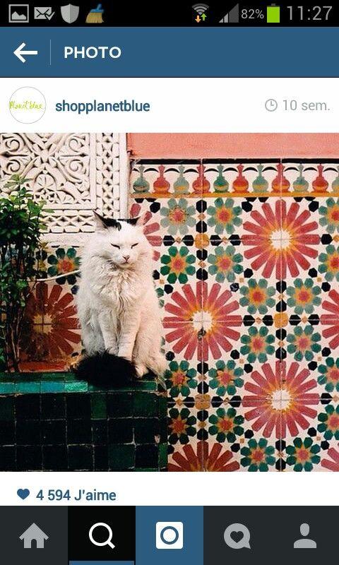 Cat azulejos gato
