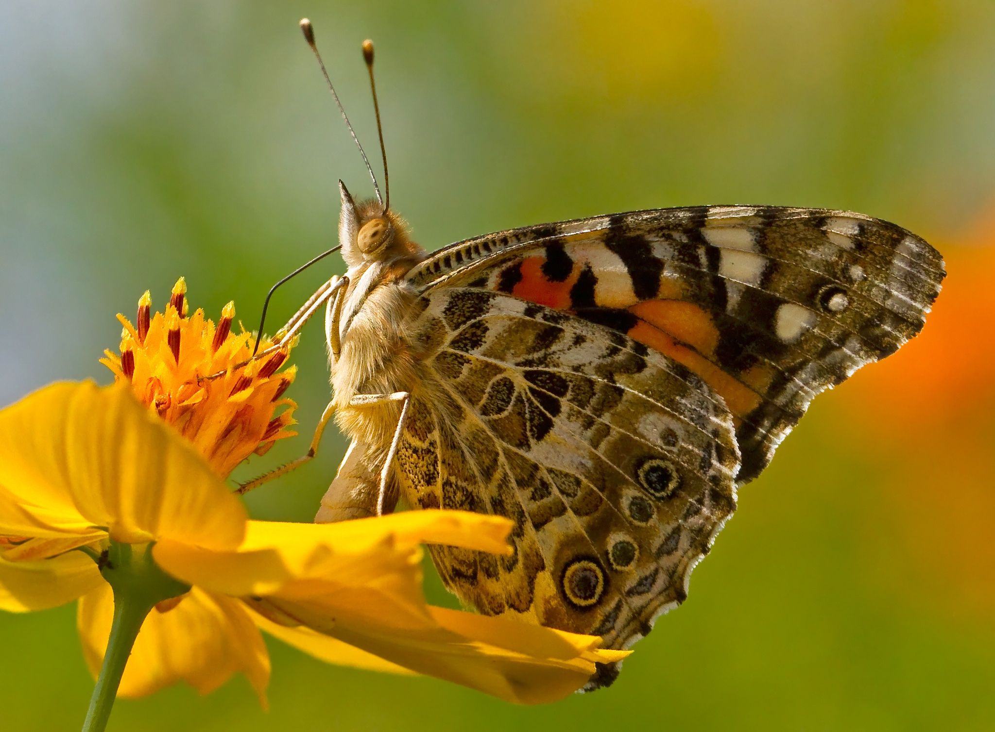 Got My Eye On You by Lorraine Hudgins on 500px | Butterfly ...