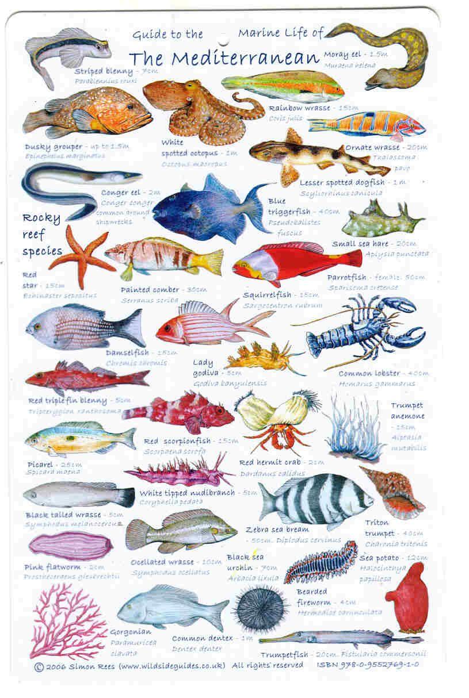 ловить большую рыбу на английском