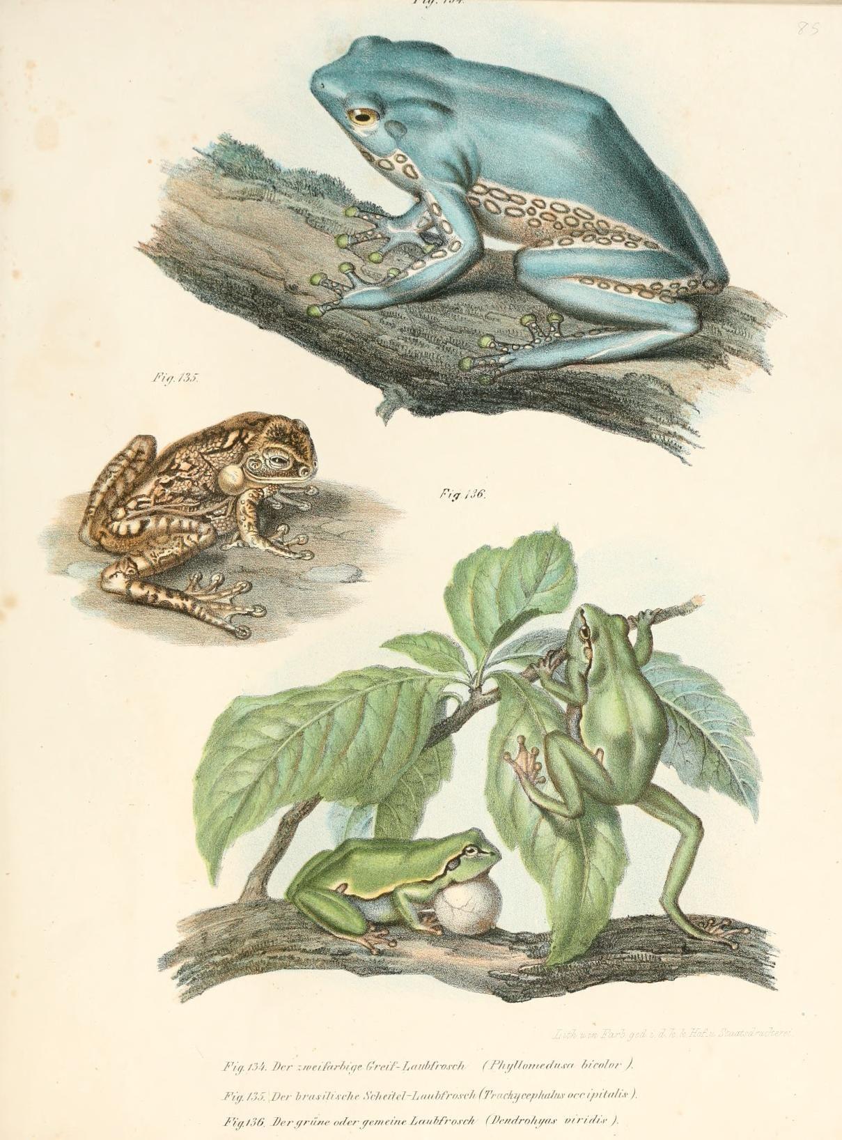 Bilder-Atlas zur wissenschaftlich-populären Naturgeschichte der Wirbelthiere / - Biodiversity Heritage Library
