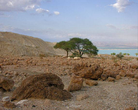 Rocks and Accacia Tree Near Dead Sea  Fine art by MorrisClassics, $27.50