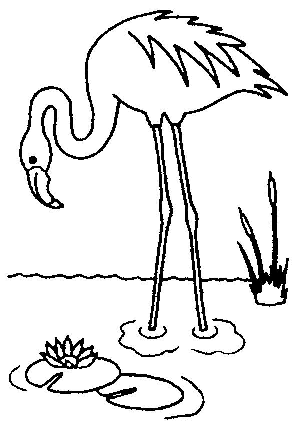 Flamingo Coloring Page Flamingo Coloring Page Bird Coloring