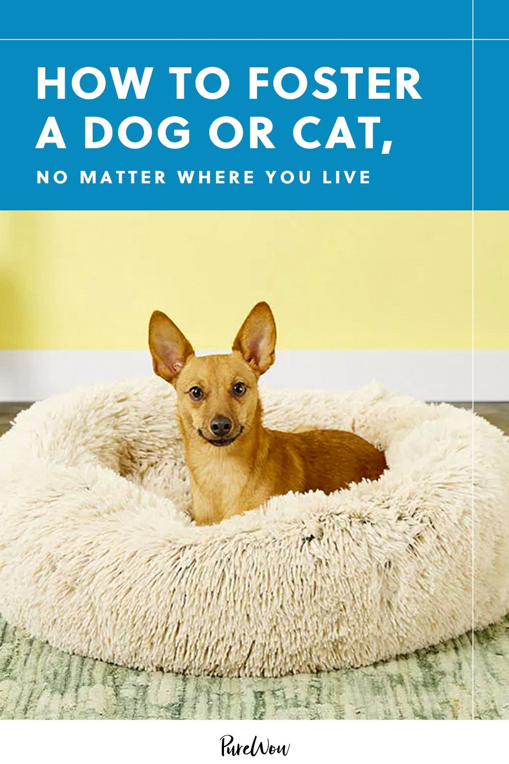 How To Foster A Dog Or Cat No Matter Where You Live Cats Cat Adoption Foster Dog