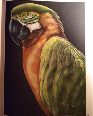 Macaw By Julie White