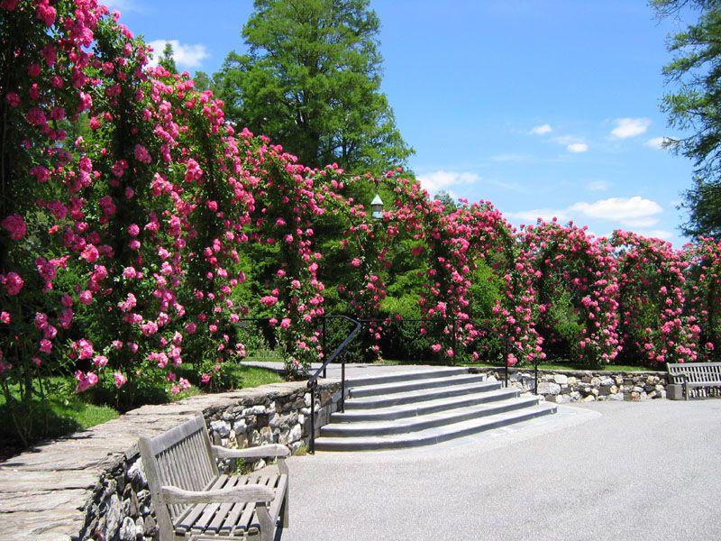 Roses   Longwood Botanical Garden   Pennsylvania By Gul Dixon