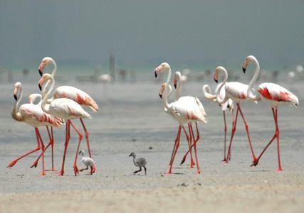 Birds Of Sir Bani Yas Island 8211 Beautiful Creatures Of Flight Beautiful Creatures Yas Island