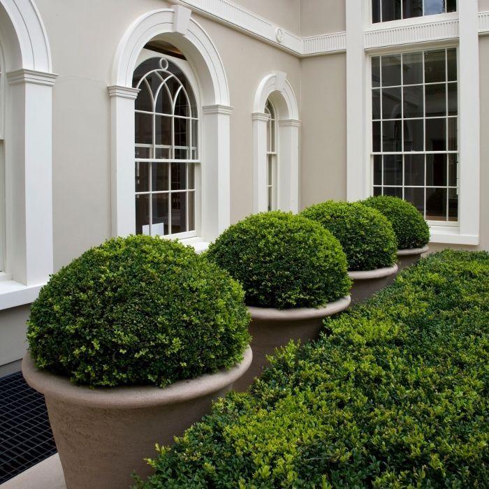 detalles entre casa y jardineras