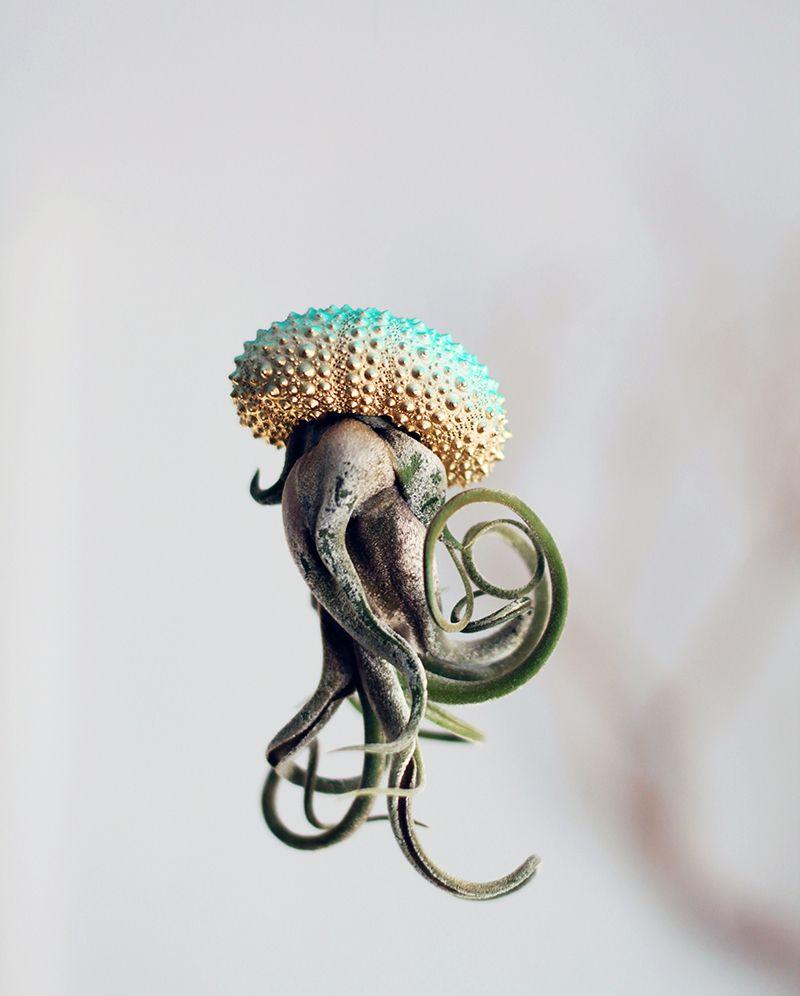 Cathy Van Hoang's Air Plant Jellyfish | iGNANT.de