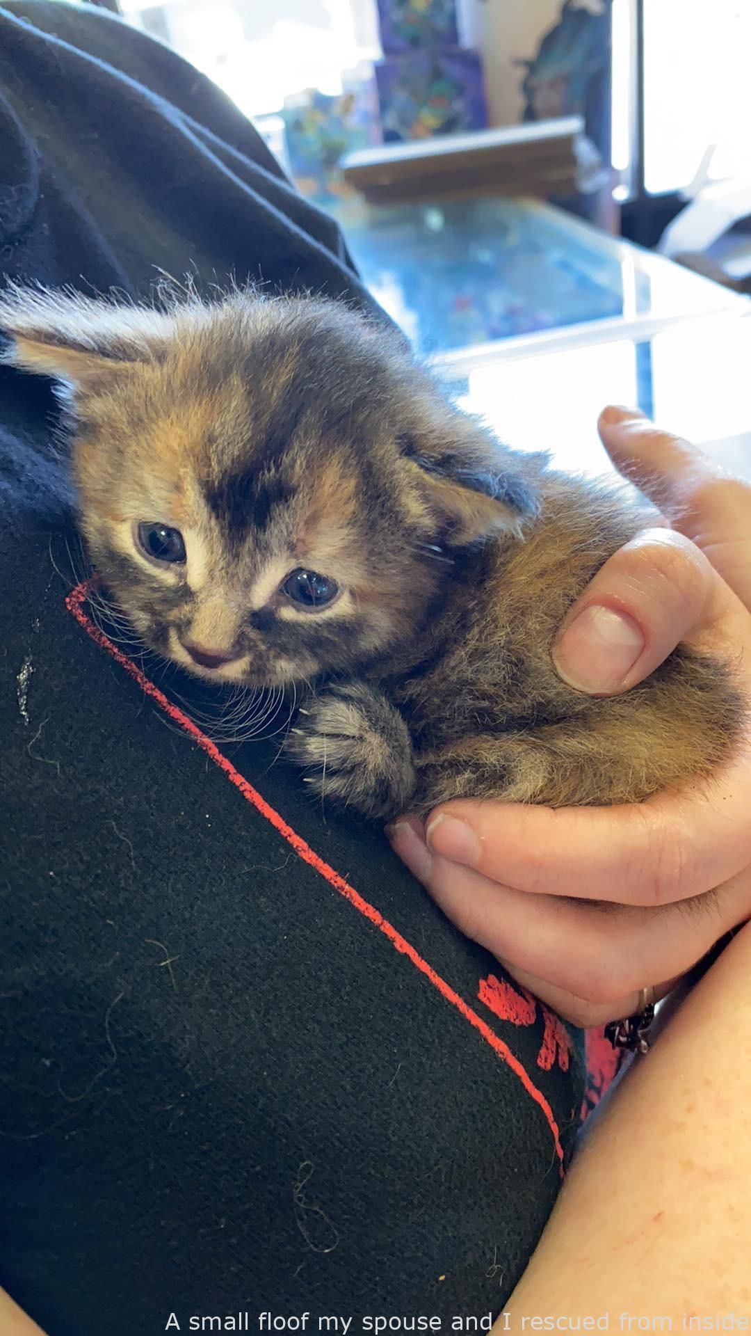 #Positivethings  - A small floof my wife and I rescued from within a vehicle – hot #adorable animals funny , #animals hilarious , #cute animal , #cutest animals , #so cute animals