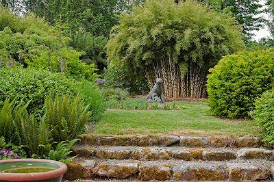 Fargesia robusta Beautiful gardens, Garden inspiration