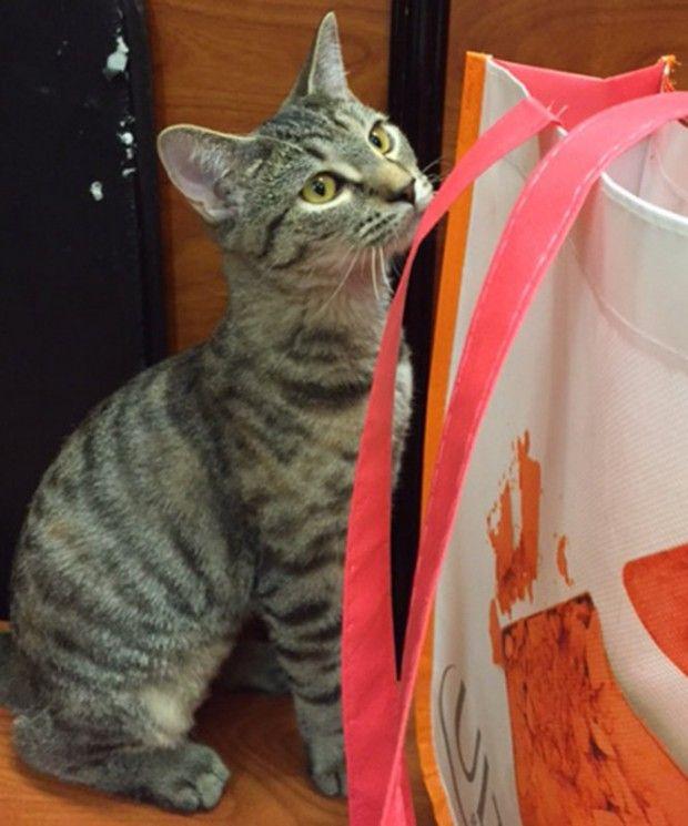 Rescued Kitten Is Ready For A Home Kitten Rescue Kittens Tabby