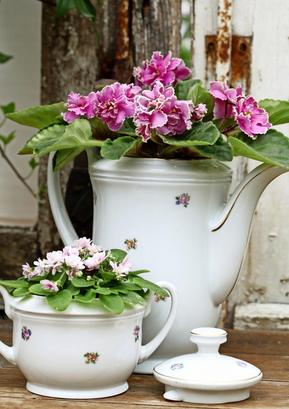 Syklaamit, esikot ja muut kukkivat ruukkukasvit antavat väriterapiaa pimeään vuodenaikaan. Katso Viherpihan ideat!