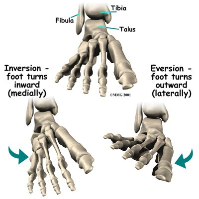 Subtalar Joint Google Search The Foot Pinterest Foot Anatomy