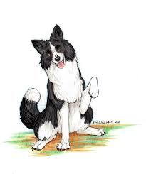 Image Result For Cartoon Border Collie Border Collie Humor