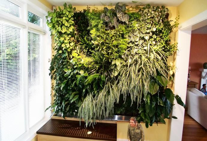 Create An Indoor Living Wall Of Plants Bcliving Family Room