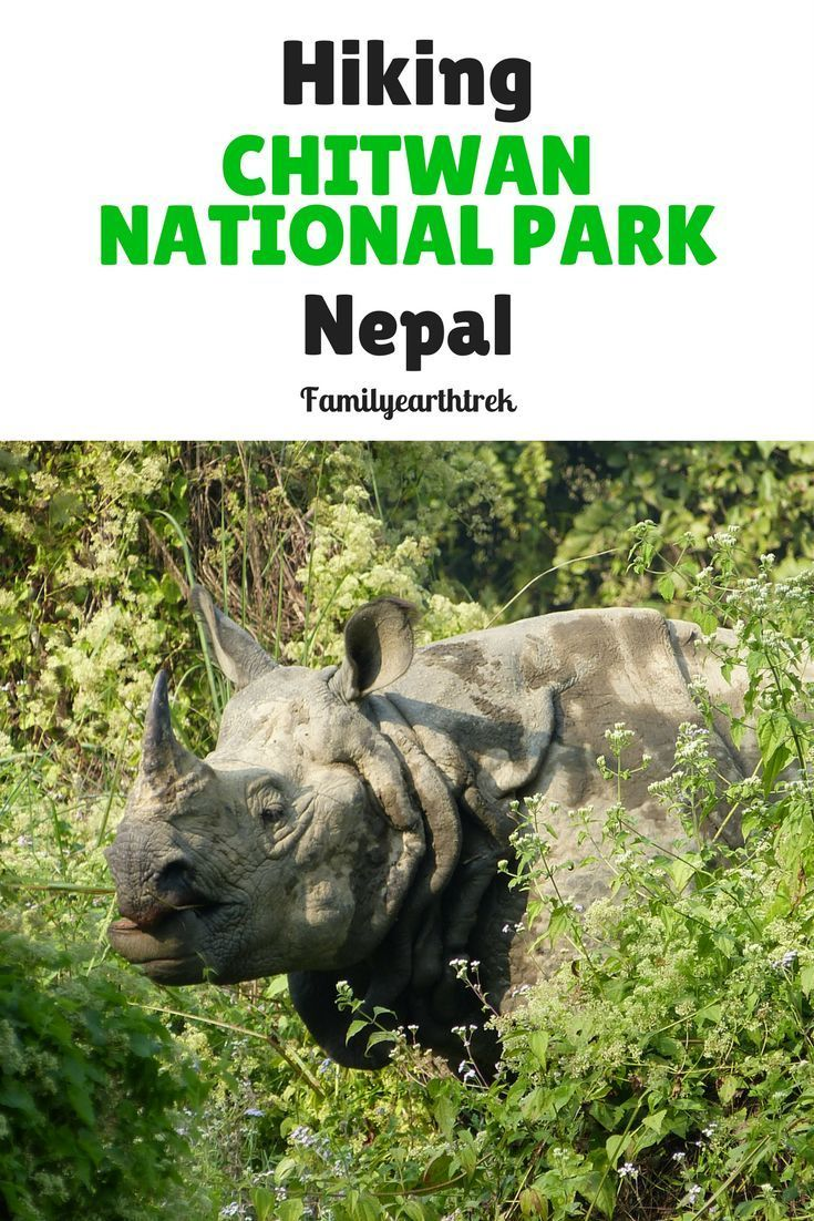 Hiking For Wildlife In Chitwan National Park, Nepal