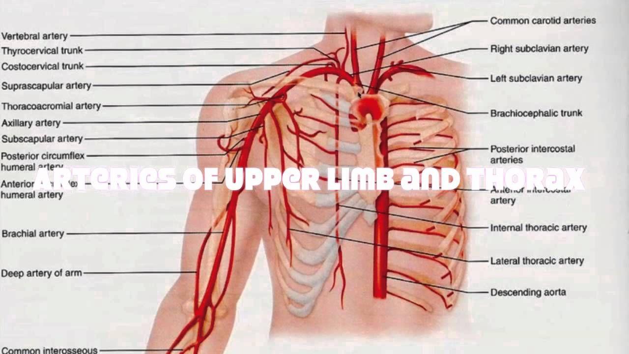 07e40e2bca6a99514549e013dee8b925 - How Does Blood Get From An Artery To A Vein