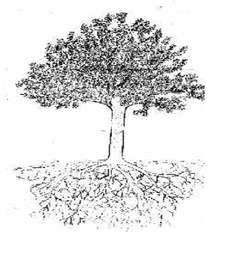 Welcome This My Blog Story In My Life Memecahkan Psikotes Menggambar Pohon Draw A Tree Tes Kepribadian Gambar Pohon Yang Dipi Menggambar Pohon Gambar Pohon