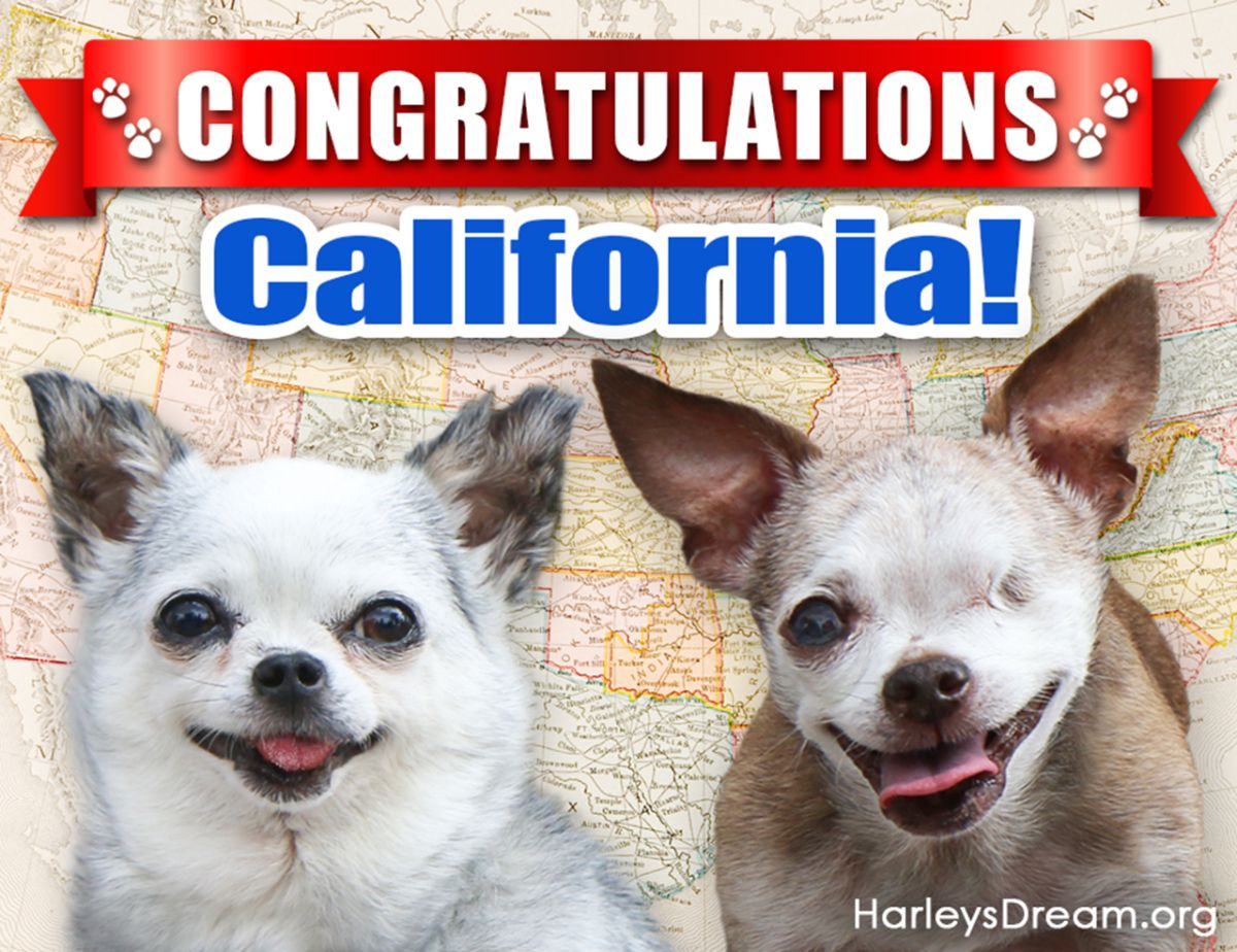 California First Statewide Pet Store Ban Puppy Mills Pets