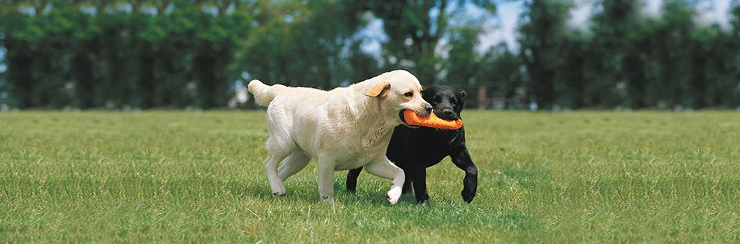 Keep up your dog's training sessions! Pets, Your dog