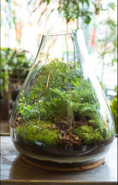 Build mom a terrarium chic diy mothers day gift ideas