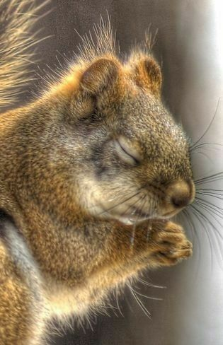 It almost looks like this squirrel is praying. I love ...