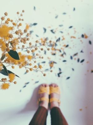 Yellow Wattles Photo Of A Photo Emilie Ristevski Vsco Grid