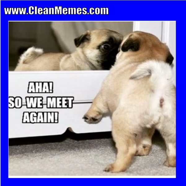 Pin by Clean Memes on Clean Memes (With images) Pugs