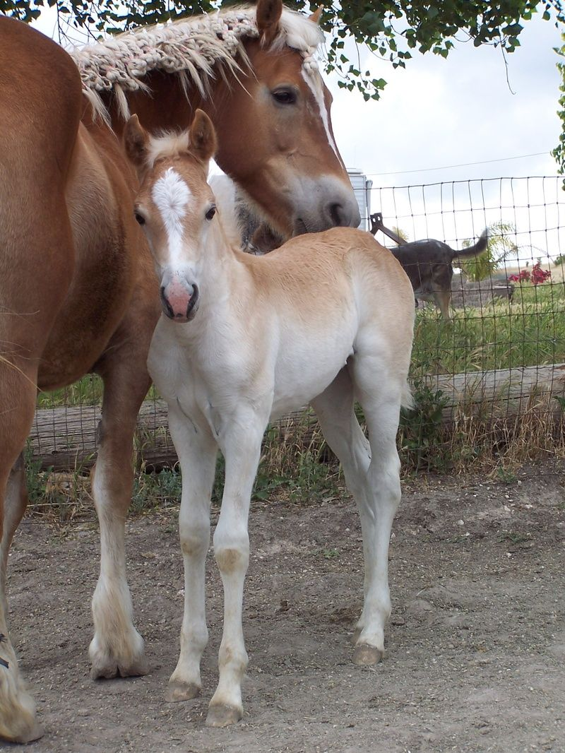 I believe horses are the most beautiful creatures on this earth! Love, love, love them :)