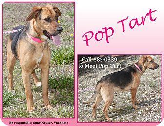 Cuba Mo German Shepherd Dog Mixed Breed Medium Mix Meet Pop