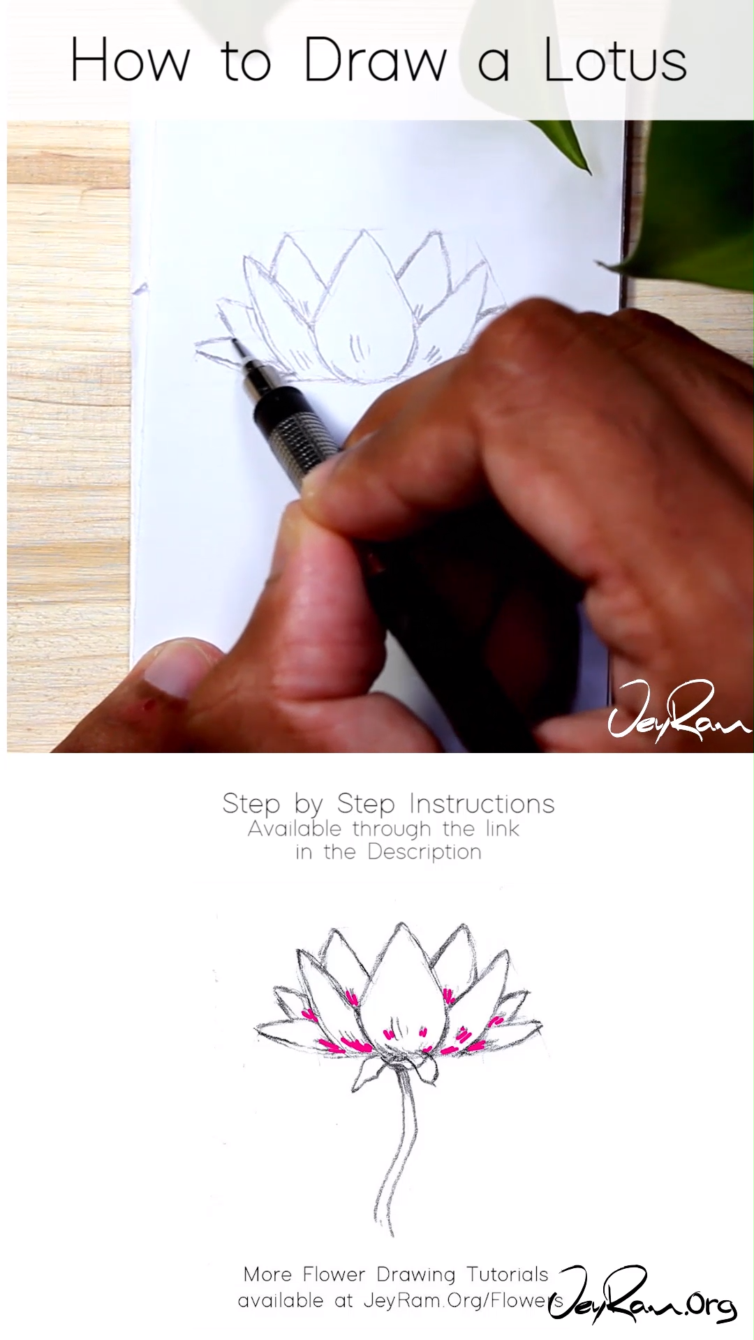 How to Draw a Lotus Flower Step by Step for Beginners