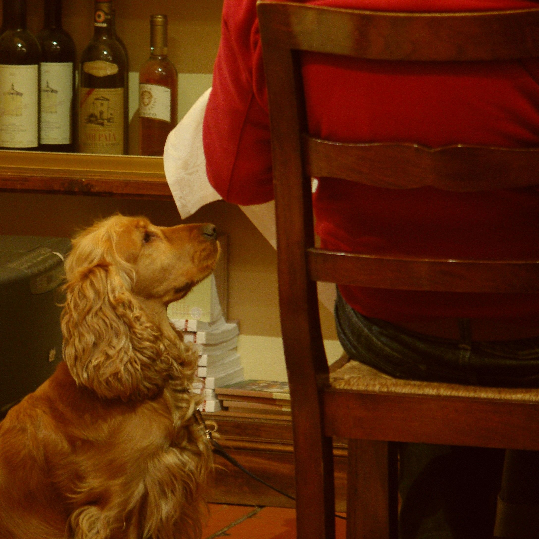 Dogs in Restaurants, Florence, Italy Animals, Dogs