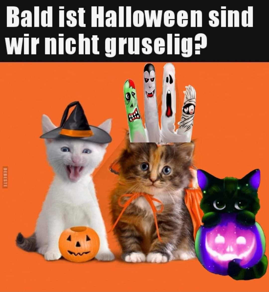Pin Von Kerstin Wilke Auf Katzen Katze Lustig Lustig Humor Katzen