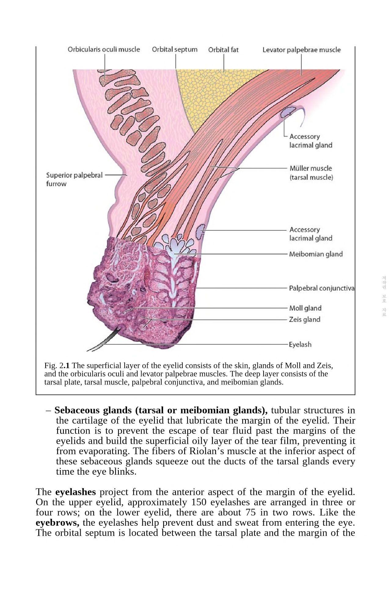 Ophthalmology | Ophthalmology | Pinterest | Books