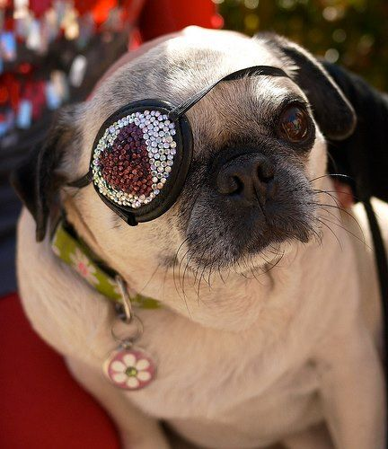 @TrixieThePug for @EyeCandyPatches Designer Eye Patches!