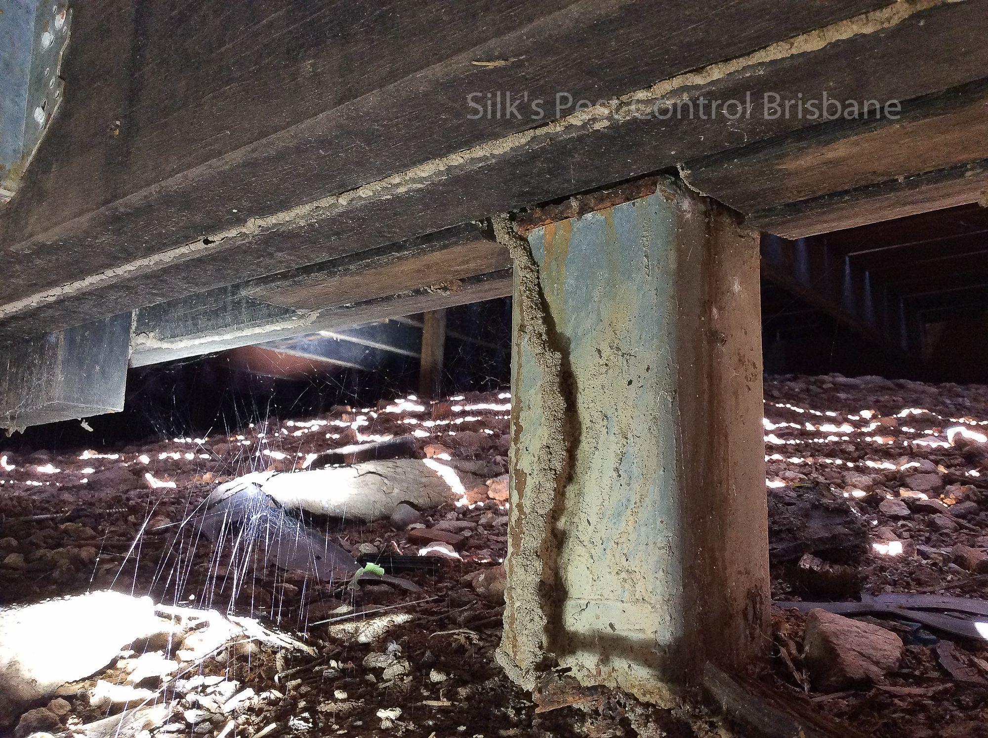 Silk S Pest Control Warner Termite Pest Control Experts Termite Inspection Pest Inspection Pest Control
