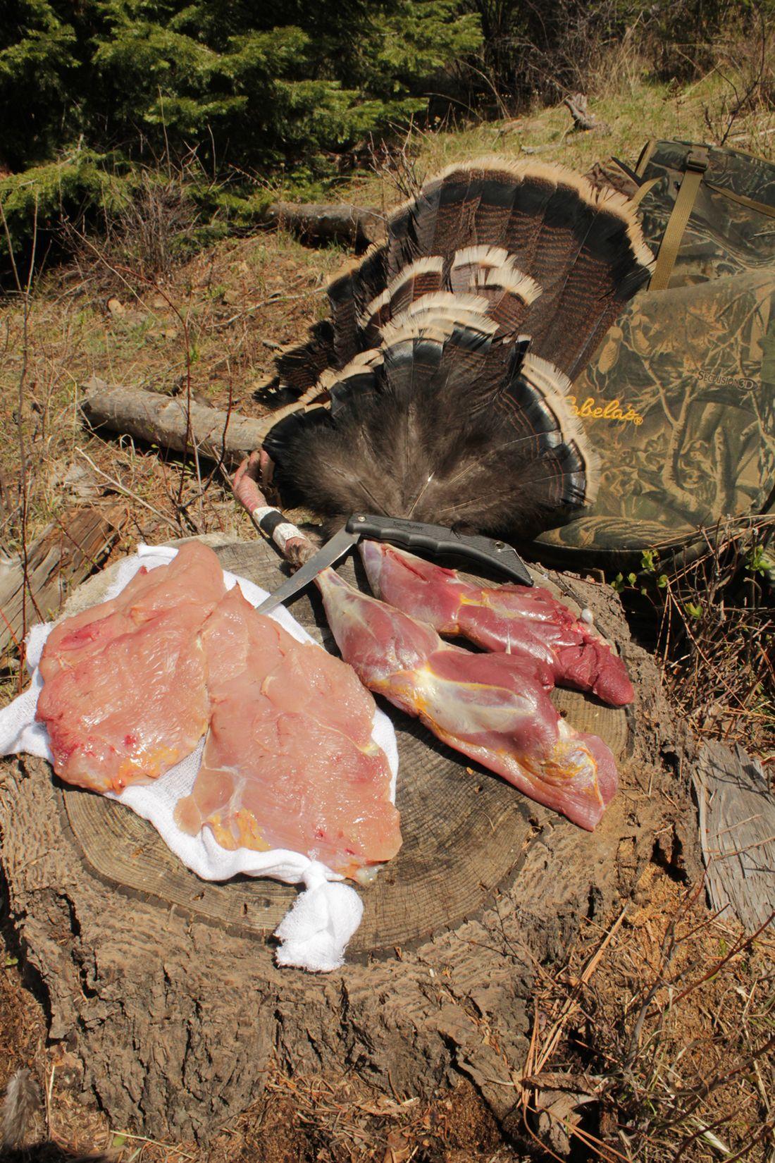 Clean that bird quickly bird national wild turkey