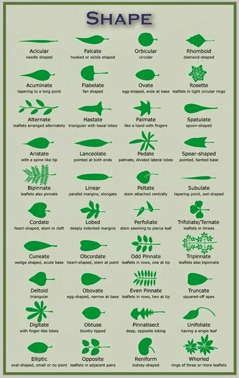 Cool leaf chart