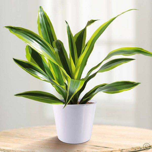 34 Poisonous Houseplants For Dogs And Cats Indoor Green Plants