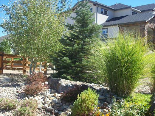 A Wide Variety Of Xeric Plantings Including Trees Shrubs Plants Ground Cover And Ornamental Grasses As Xeriscape Landscaping Xeriscape Front Yard Xeriscape
