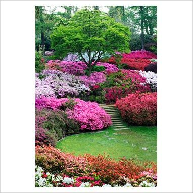 07e909dd31cfb51bd22c96dc5f8b69f9 - Best Gardens For Azaleas And Rhododendrons