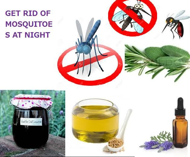 How To Get Rid Of Mosquitoes Mosquito Plants Natural Mosquito