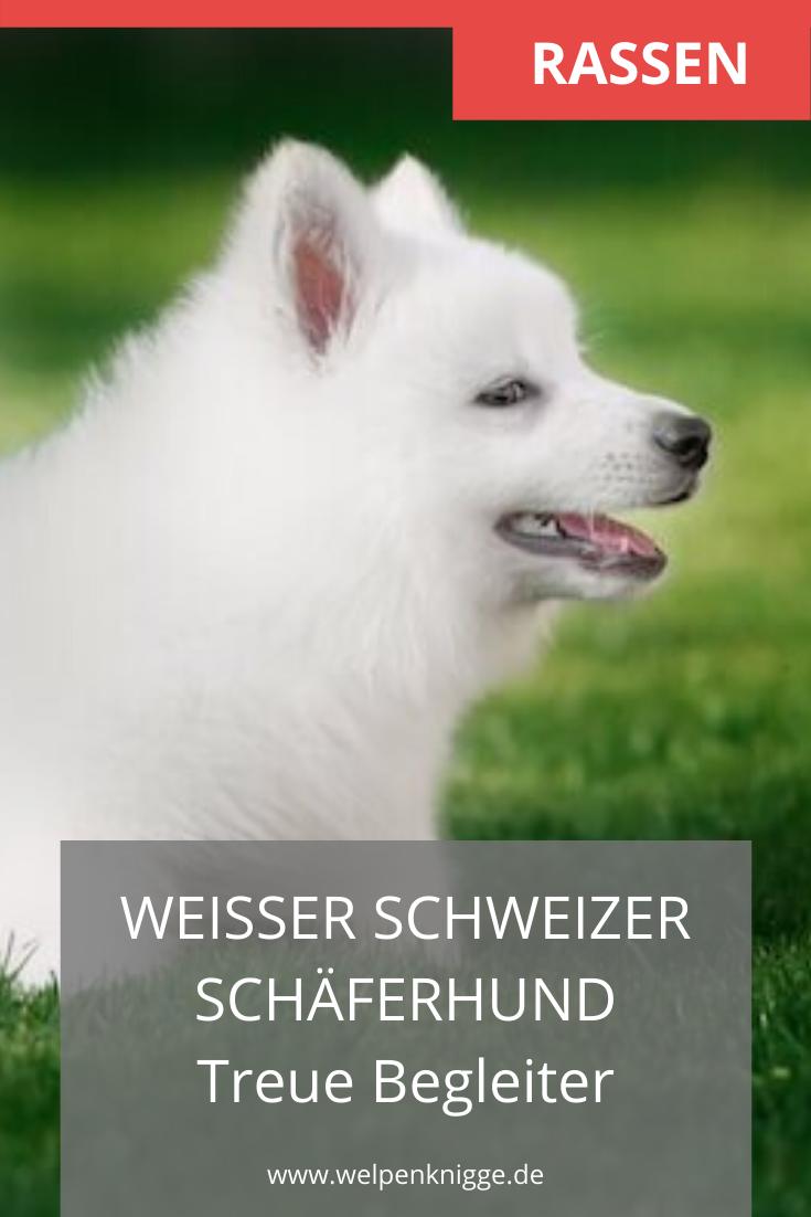 Pin Auf Welpenrassen Hunderassen Rassen Von Welpen