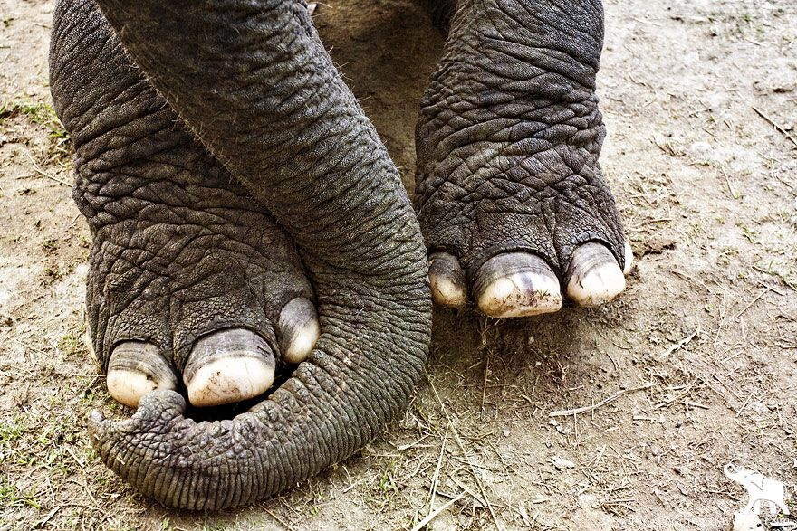 Elephatttyyy