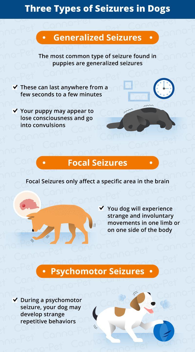 Seizures In Puppies Causes Symptoms Vet Tech Student Meds
