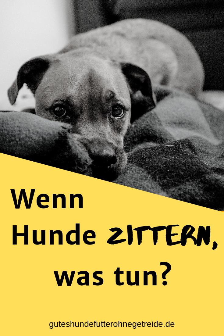 Photo of Warum zittert mein Hund? Zittern, das sollten Sie wissen : Dogco.de