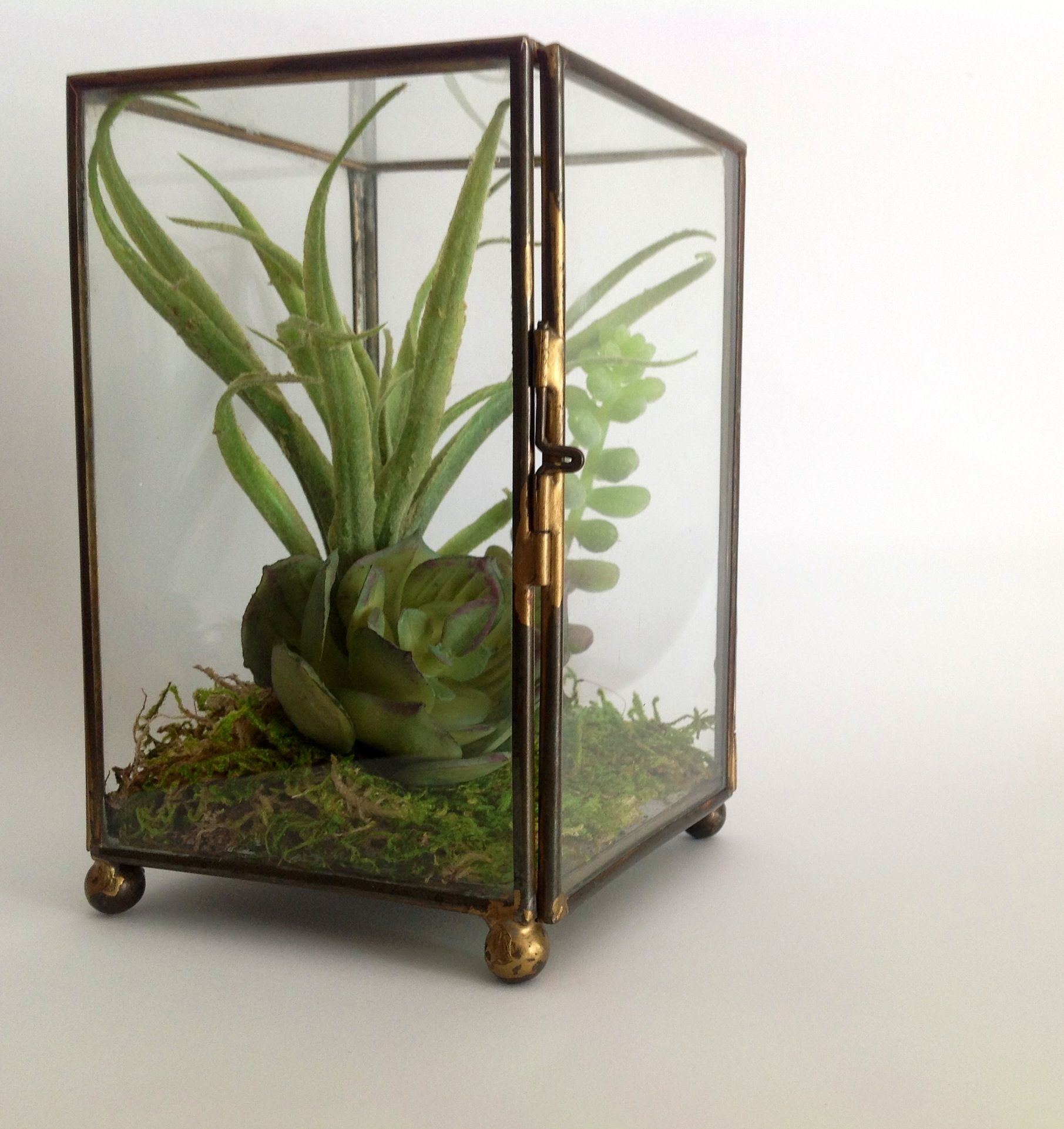 Artificial succulent in antique hinged case