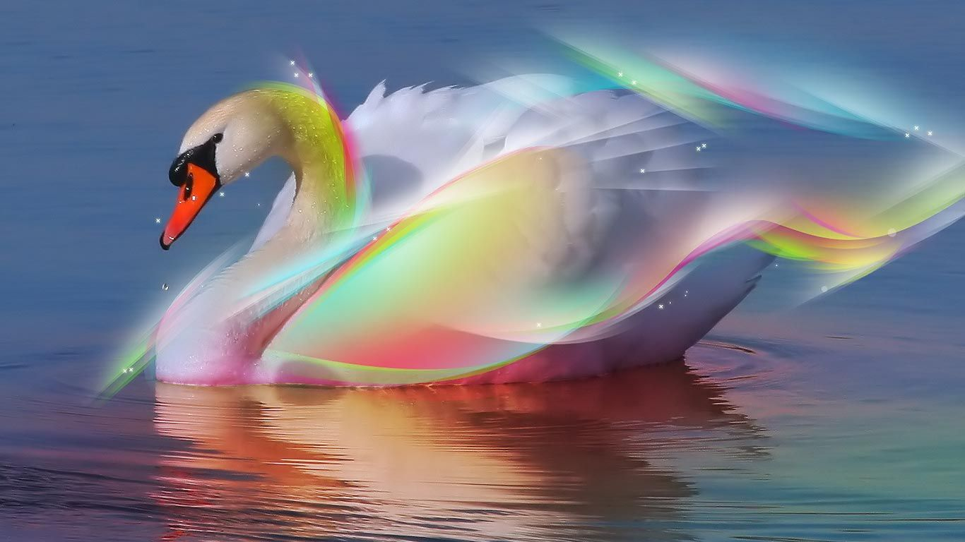 Hd Wallpapers أحدث صور خلفيات جميلة جدا للكمبيوتر Tecnologis Swan Pictures Swan Wallpaper Beautiful Swan