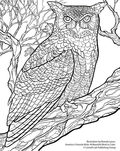 Free Wallpaper Download From The Cornell Lab Owl Coloring Pages Bird Coloring Pages Coloring Pages