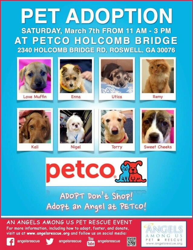 Pin By Angels Among Us Pet Rescue On All About Aau Petco Dog Adoption Pet Adoption